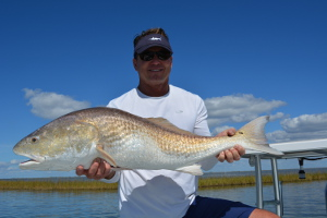 cocodrie louisiana bull redfish