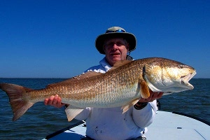 dye redfish