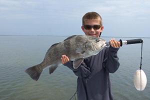 lemmon black drum