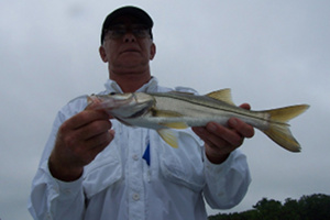 messina snook