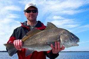 neal black drum