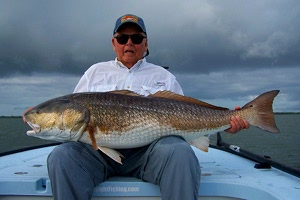 50 pound redfish caught in mosquito lagoon