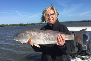 winter redfish in mosquito lagoon