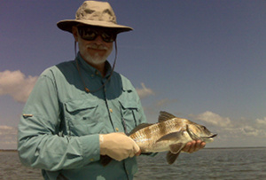 pupedis black drum on fly